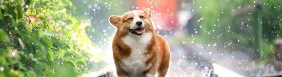 nasser-hund-schuettelt-sich